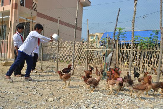 TraTho-Chicken